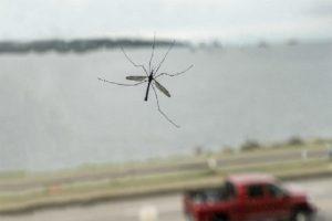 limpiar los mosquitos del coche