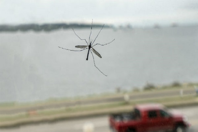 5 claves para evitar que los mosquitos no deterioren tu vehículo