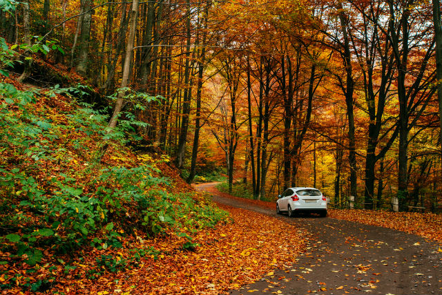 Cómo preparar el coche para la llegada del otoño