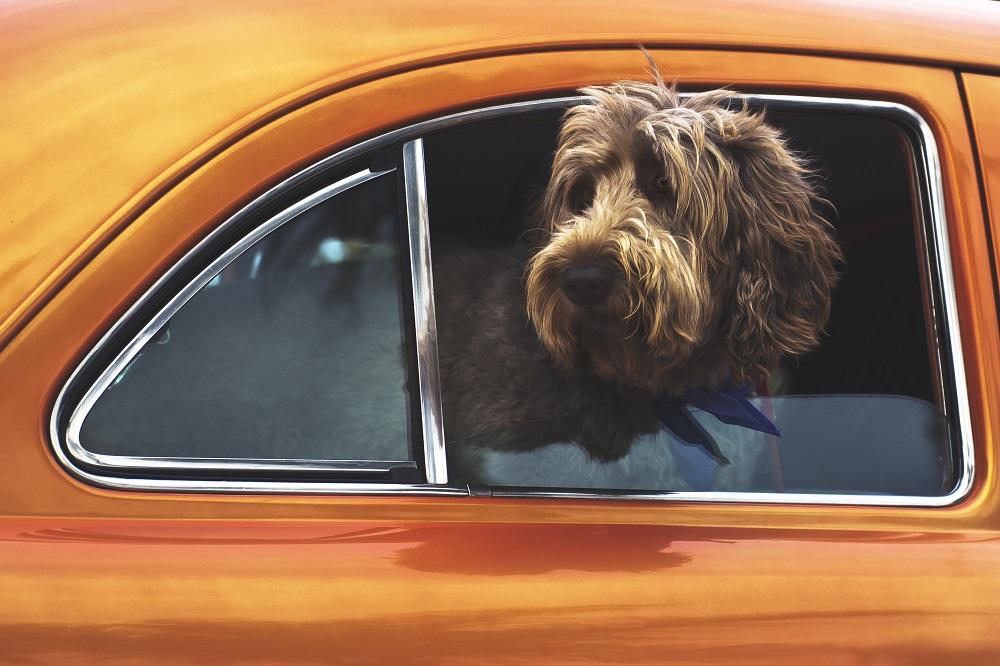 ¿Viajas con tus mascotas en el coche?