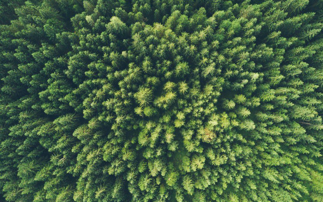 Prácticas para reducir el impacto medioambiental desde los talleres
